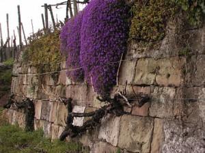 Bewachsene Trockenmauer