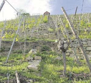 Trockenmauer Esslingen